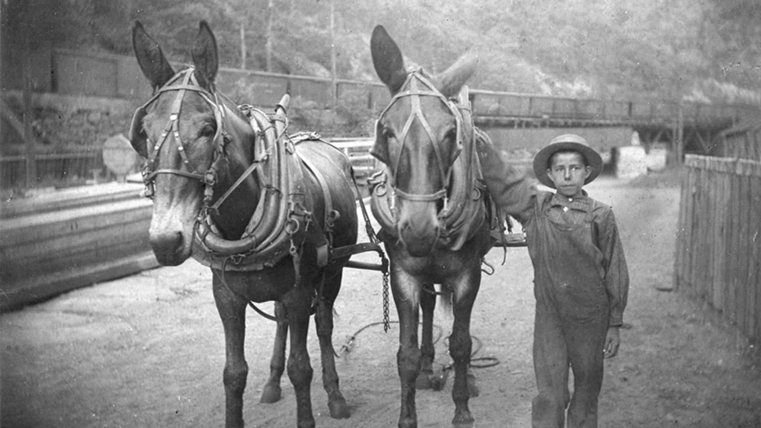 In this picture it is obvious how young mule tenders could be.  Imagine being in charge of animals that are that much larger than you.