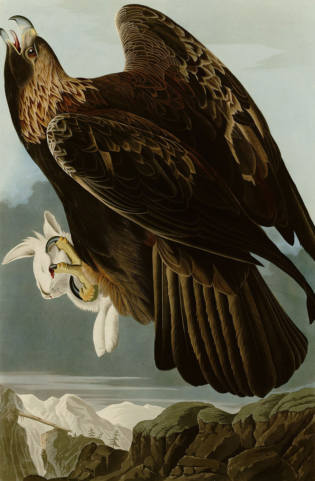 Plate 181 of The Birds of America by Audubon depicting a golden eagle, 1833–34.